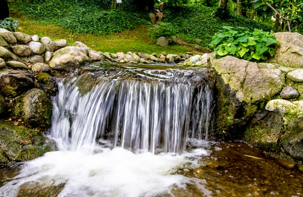 Botaniska trädgården i Belgrad